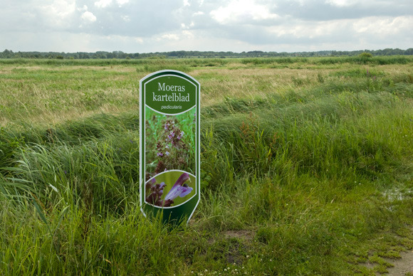 Nature in the Netherlands « Helmut Smits