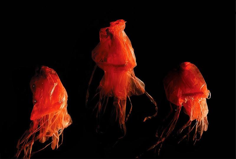 Jellyfish | COÖP