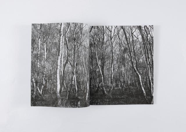 whatarogue.com/Work/The_Woods/
