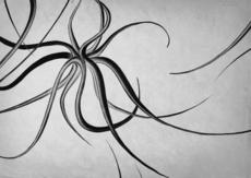 Gestalterkrankheiten - Illustration on the Behance Network