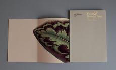 Julie Drummond-Hay – Glint Create