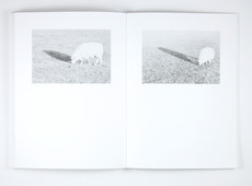 Atelier Carvalho Bernau: Jochen Lempert: Recent Field Work