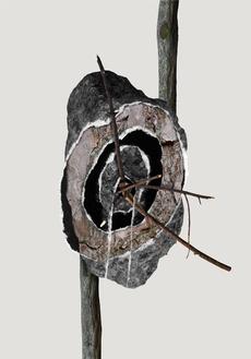 Trees Rocks2011 - Kasper Pyndt